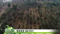 东方:培育珍贵乡土树种 发展珍贵乡土树种产业