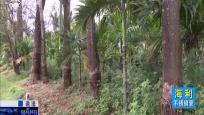 法庭内外:公路林的公益案