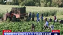 自贸进行时:海南加强与非洲国家农业合作 实现两地共赢发展