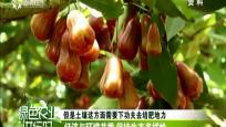 探索海南自贸区建设下生态农业发展(一)