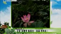 临高皇桐:结合实际发展荷花产业 村民有多种收益促脱贫