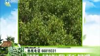 """河南商城:走进大别山 探秘""""茶油""""制作过程"""