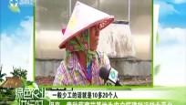 保亭:黄秋葵育苗基地为农户搭建就近就业平台