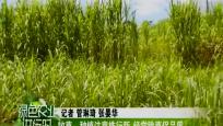 牧草:种植注意株行距 经常除草保品质