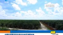 中国印尼聚龙农业产业合作区造福当地