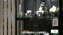 武汉赏石文化与艺术