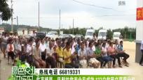 臨高博厚:鳳梨扶貧產業見成效 137戶貧困戶喜獲分紅