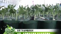 文昌:冬种集约化育苗 产业扶贫促增收