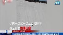 小熊跟著媽媽攀爬雪山懸崖 一度失敗滑落底端也不放棄