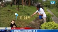 大熊猫真的听得懂四川话?