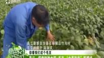 《绿色农业进行时》2018-12-10