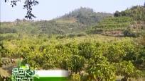 三亚:特色诺丽产业促农收 开发高附加值农产品