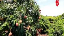 《绿色农业进行时》2018-12-15