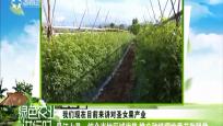 昌江七叉:结合当地区域优势 推广种植樱桃番茄助脱贫
