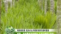 琼海:农村青年回村创业 立志打造斑兰产业