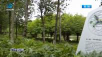 """三亚湿地保护工作显成效 引来""""稀客""""白眉田鸡"""