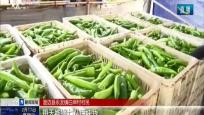 海南:冬季瓜果菜出岛忙  相关部门全力保障过海通畅