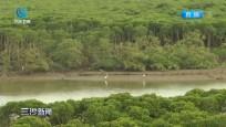 東寨港生態環境優良 成為鳥類的天堂
