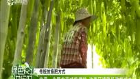 屯昌:化肥農藥減施增效 改善環境降低種植成本