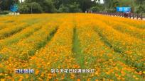 瓊海:百花盛開迎博鰲亞洲論壇年會