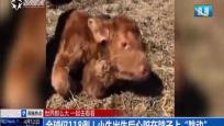 """全球僅118例!小妞出生后心臟在脖子上""""跳動"""""""