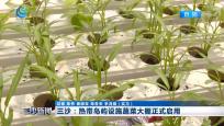 三沙:熱帶島嶼設施蔬菜大棚正式啟用
