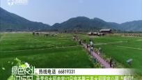 """世界级水稻专家12日将齐聚三亚水稻国家公园""""看稻"""""""