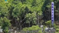 幽秘神奇 倚海而生——海南有片紅樹林
