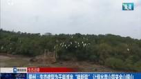 """儋州:生态修复为千亩滩涂""""换新装""""让绿水青山带来金山银山"""