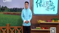 《绿色农业》2019年04月18日
