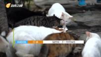 猫的城·不一样的猫生