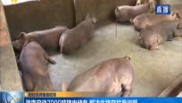 防控非洲猪瘟疫情:海南启动7000吨猪肉储备 解决生猪存栏量问题