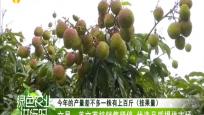 文昌:美文荔枝销售紧俏 优选品质提供市场
