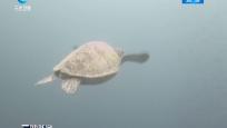 """世界海龟日:北岛有个海龟的""""家"""""""