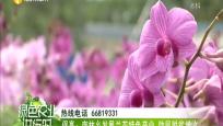保亭:南林乡发展兰花特色产业 助民脱贫增收