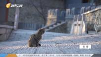 貓的城 貓的人間