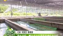 陵水龙虾:孵化成功后需隔离雌虾和幼虾