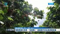 """海南蓮霧紅四季""""互聯網+""""助推現代農業高質量發展"""