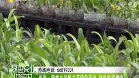 《绿色农业进行时》2019年06月17日