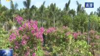 临高县美鳌村 环境治理结合花卉产业 打造乡村新风貌