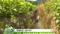万宁:桑树种植注意排水 避免积水浸泡树根