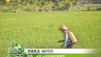 海南:水稻上保险种田更踏实