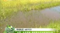 文昌:生態養地 提前兩個月備耕有機紅米