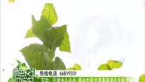 《绿色农业进行时》2019年07月20日