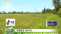 文昌:引進企業打造紅米品牌 撂荒土地重煥生機