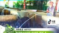 """儋州兩鎮6753農民搭上產業扶貧""""盛豐""""車"""
