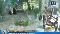 大熊貓貢貢 舜舜喜迎來瓊首個生日