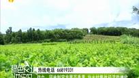 瓊中:因地制宜發展百香果 壯大村集體經濟助增收