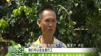 樂東:發展三紅蜜柚產業 助力鄉村振興