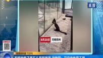 聰明的猴子用石頭砸裂玻璃 動物園:已沒收作案工具